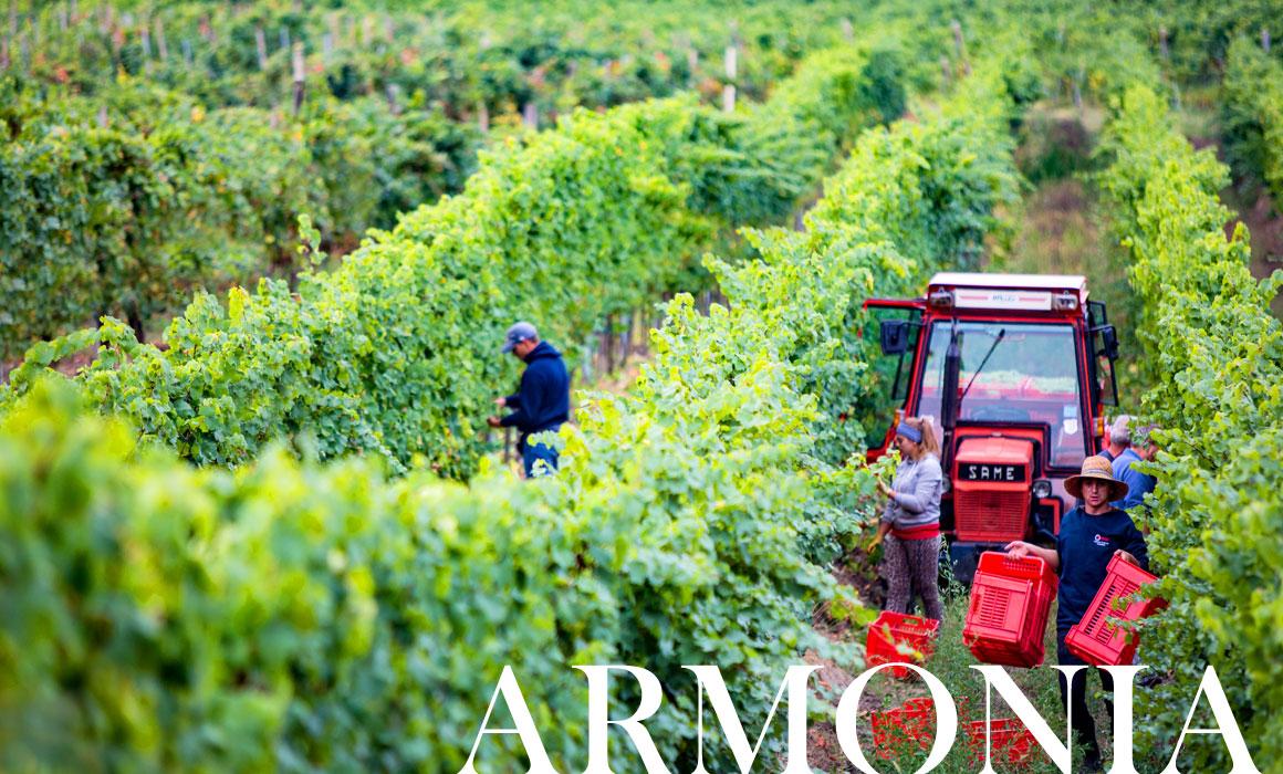 rebollini vini oltrepò pavese