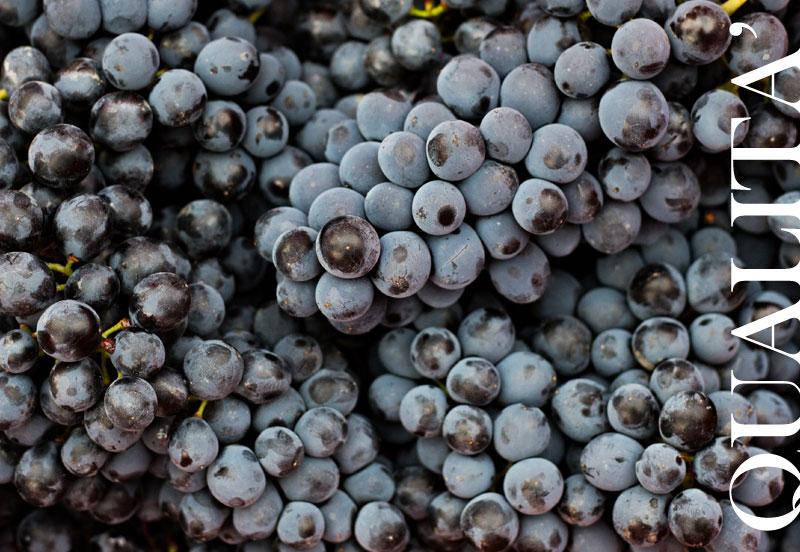 rebollini vini bianchi oltrepò pavese